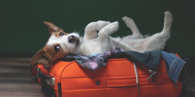 Dog Boarding Grand Rapids