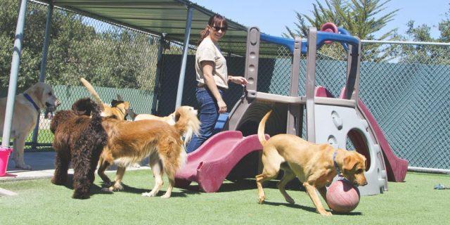Doggy Daycare Grand Rapids, MI