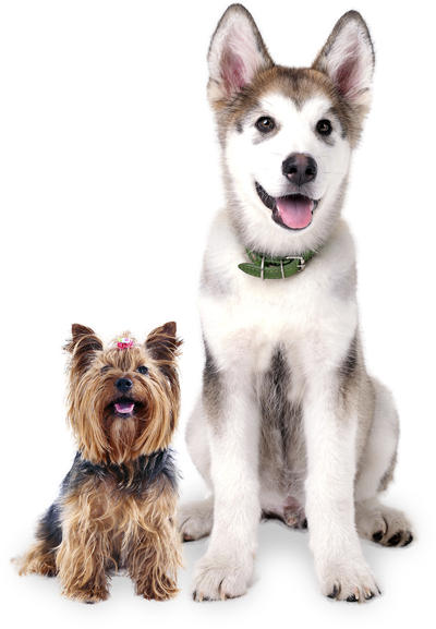 Dog Daycare Grand Rapids Kennel