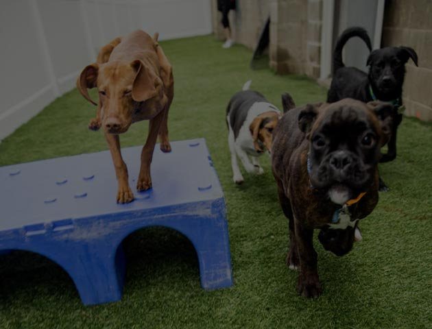 Dog Daycare Services Grand Rapids