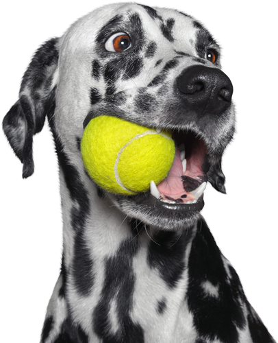 Private Dog Training Grand Rapids