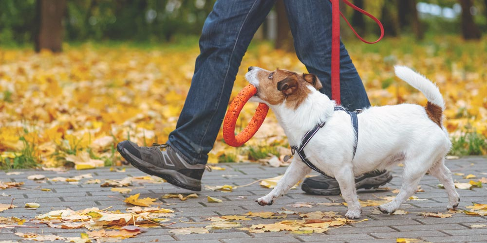 Dog Training Grand Rapids