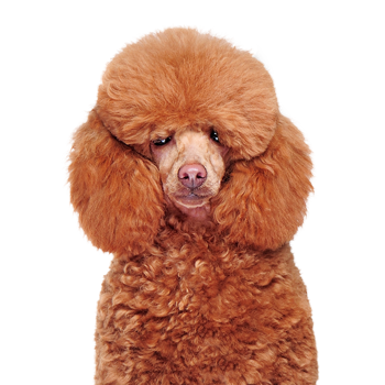 Grand Rapids Dog Groomer