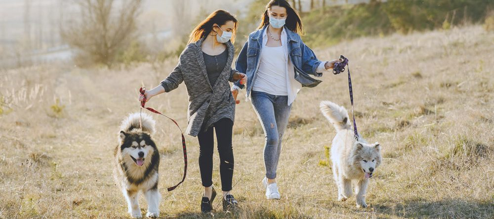 Desensitize Your Dog To PPE Face Masks