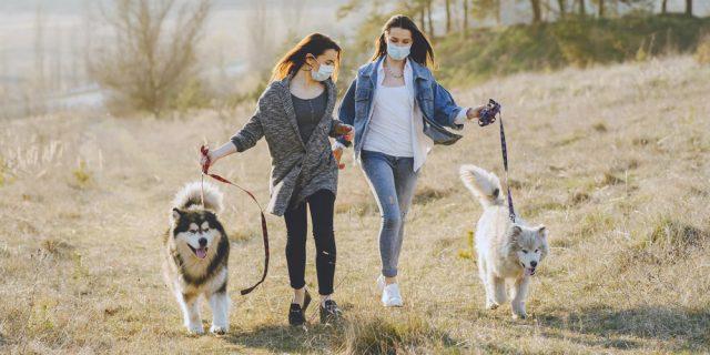Desensitize Your Dog To PPE Face Masks