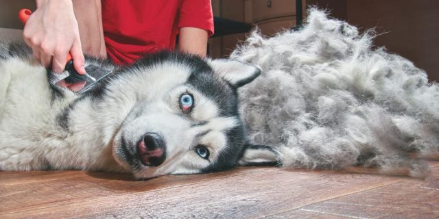 Pelted Dog Fur Grand Rapids Pet Grooming