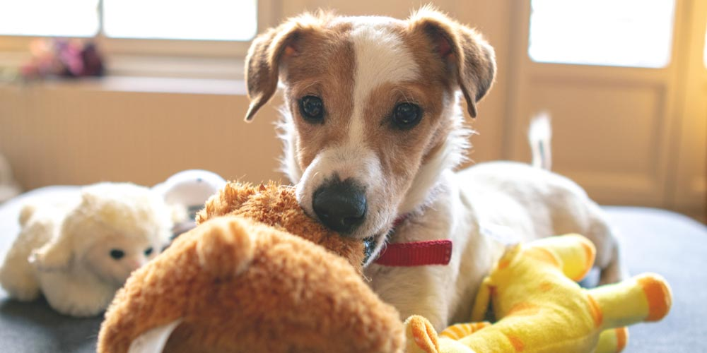What To Pack Dog Boarding Grand Rapids
