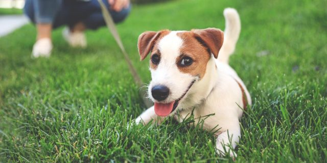 Helping Your Newly Adopted Dog Thrive