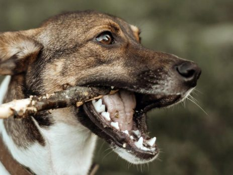 How To Stop Puppy Biting