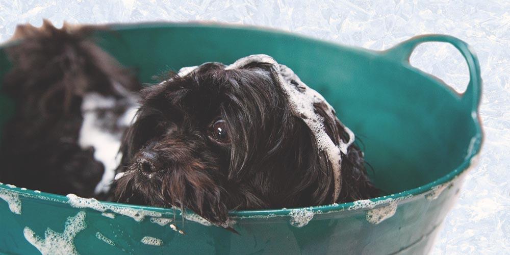 Bathe Your Dog Grand Rapids Grooming